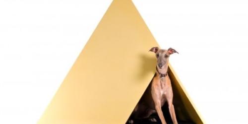 Dogchitecture Project