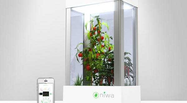 Niwa urban garden