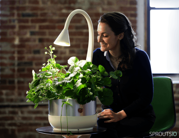 SproutsIO by Jenny Broutin Farah