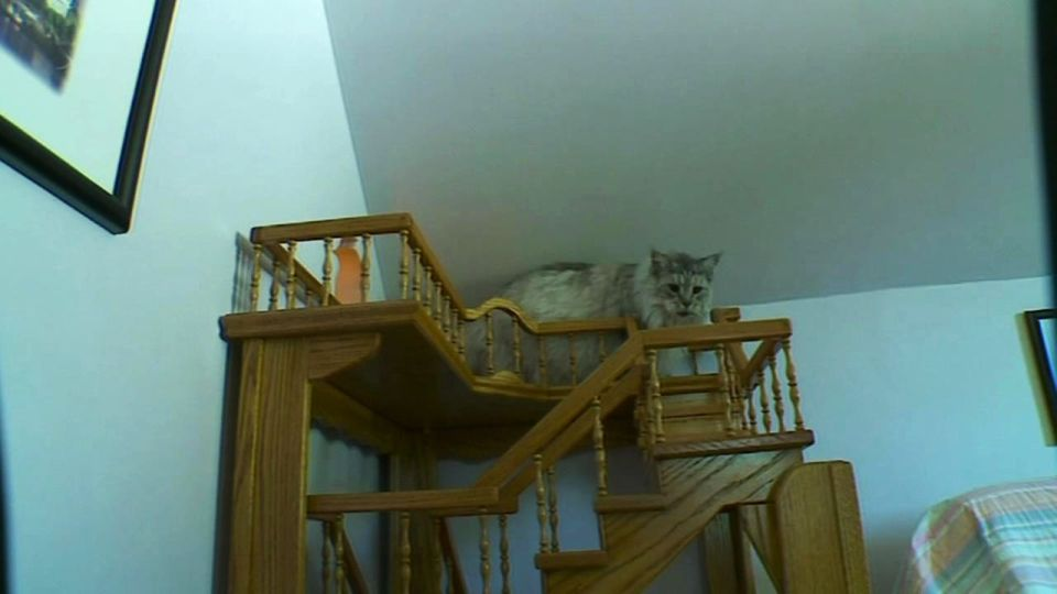 Man Builds Crazy Indoor Playhouse For His Feline Friends In 15 Years Time