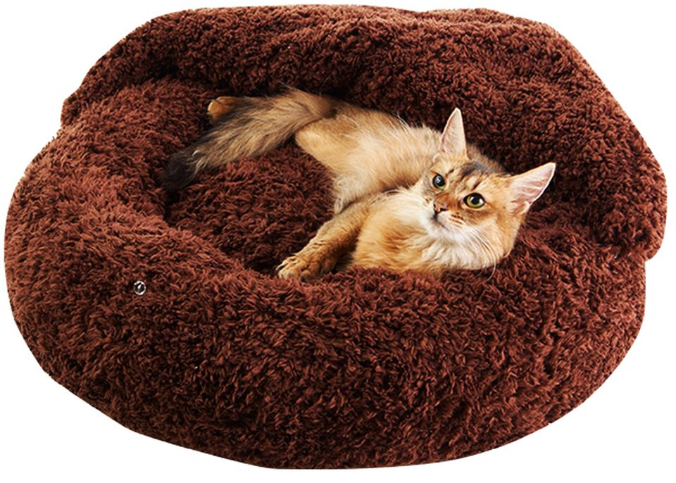 Bed and Blanket for Pets