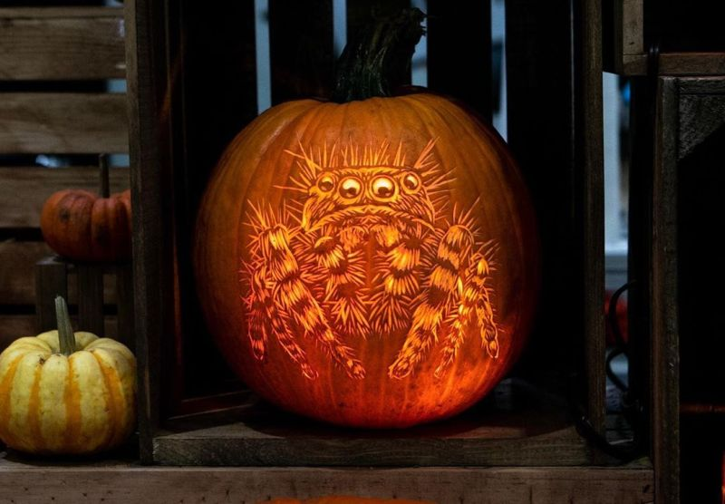 Creepy Spider pumpkin by Marc Evan of Maniac Pumpkin Carvers
