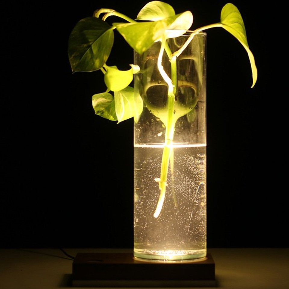 the LED light of the lamp creating beautiful effect on the plant and vase