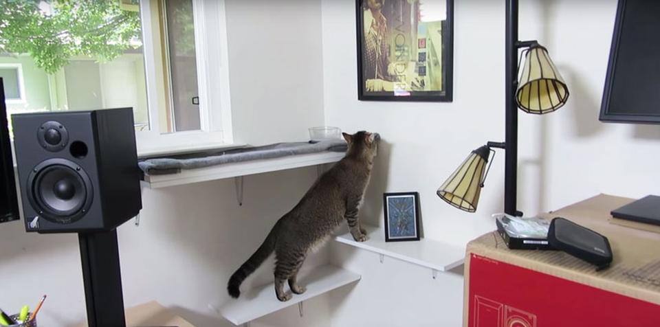 Ben Millam's cat feeding machine