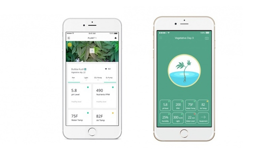 Leaf mobile application gives you real time update regarding growth of the cannabis