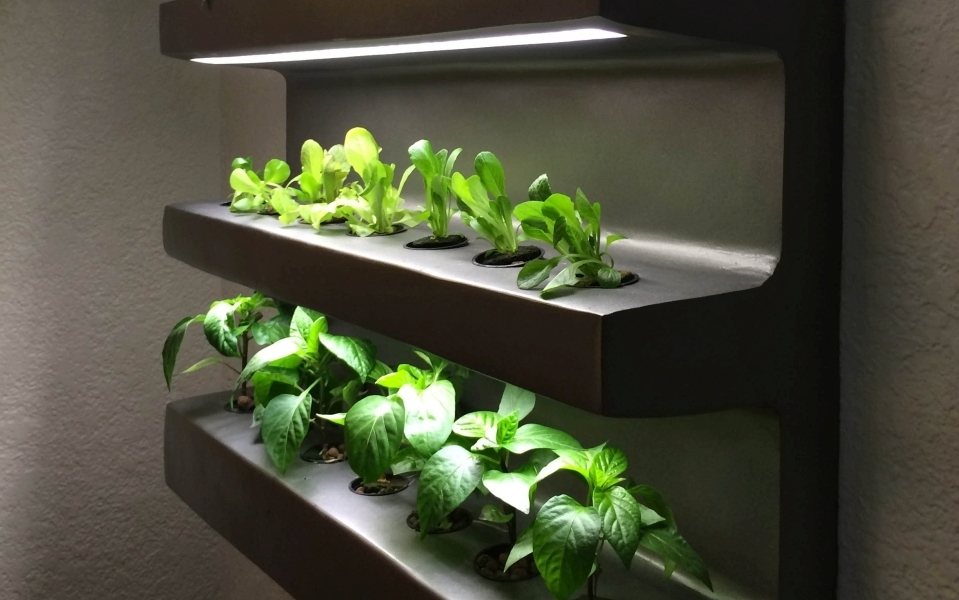 Edn Indoor Wall Garden