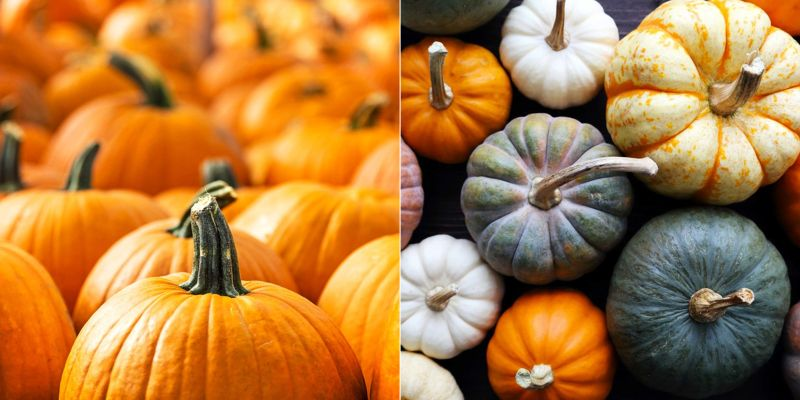 pumpkin carving tips - color and stem