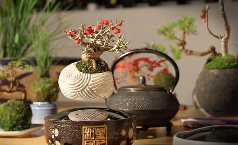 Floating Air Bonsai by Hoshinchu