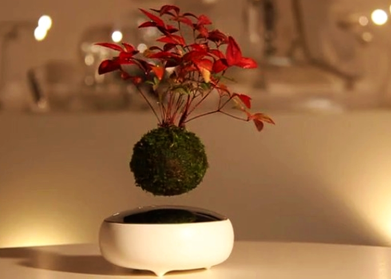 Floating Air Bonsai by Hoshinchu