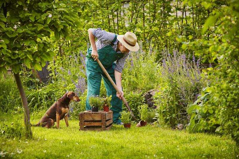 8 ways to get your garden ready for spring