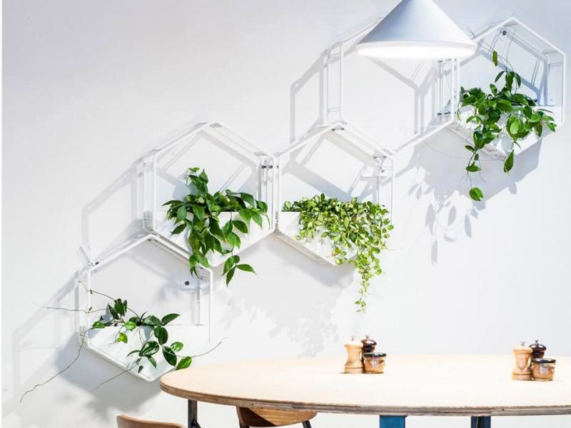 Wabe Wall Planter by Paul Glasshaus