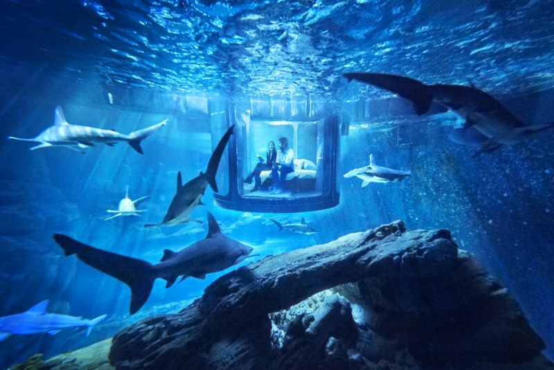 Airbnb Underwater Shark Bedroom