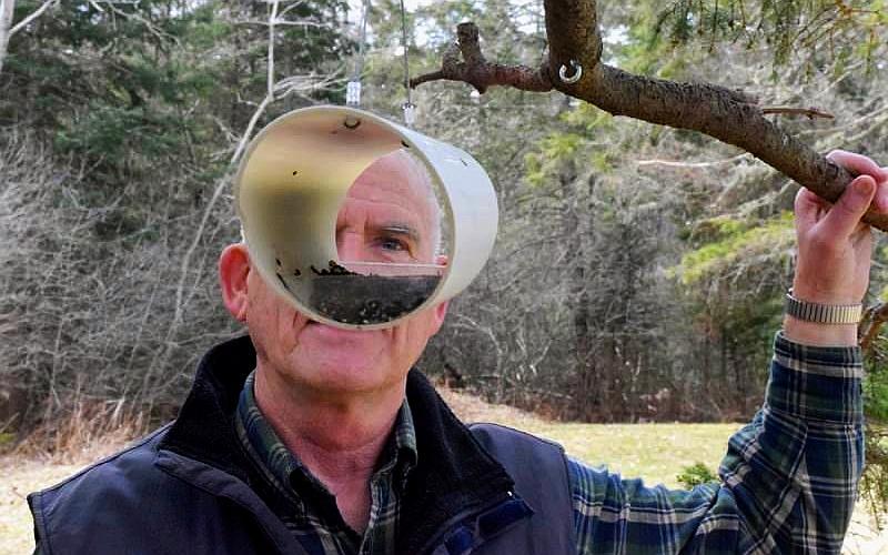 horizontal bird feeder by Randy Goodwin