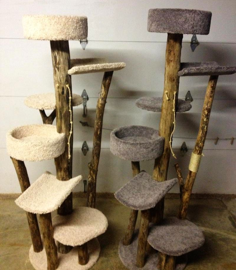 Wood stumps support tiny platforms for resting