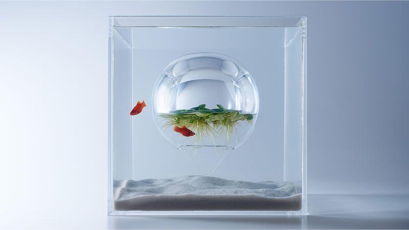 Fish Tank by Haruka Misawa