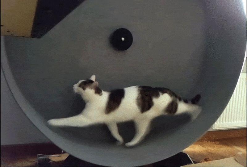 smart cat exercise wheel
