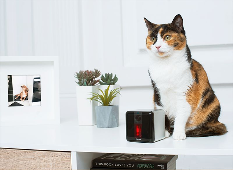 Pet-friendly design and features