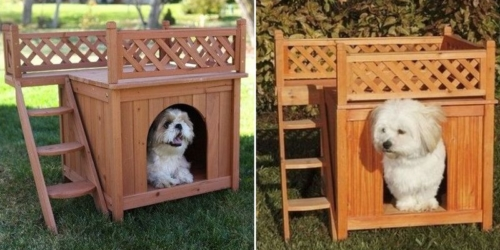 dog house with private rooftop deck