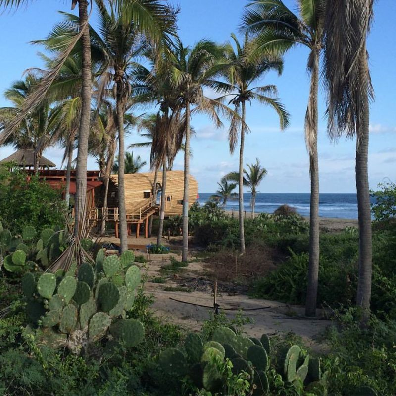 Treehouse built amidst plam trees
