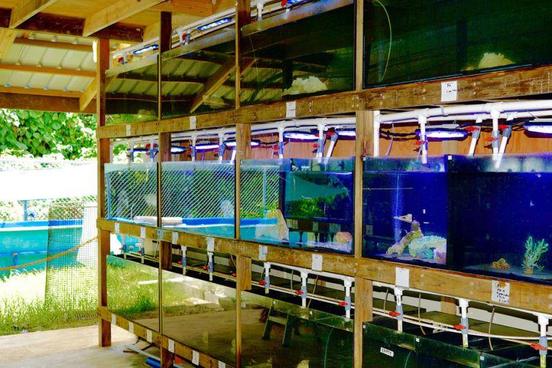 Biota Saltwarer Aquarium