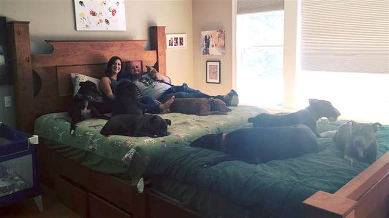 Couple builds a giant bed so their 8 dogs can sleep with them