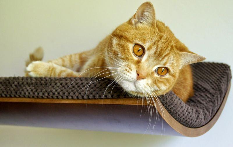 Cat Shelf Chill furniture