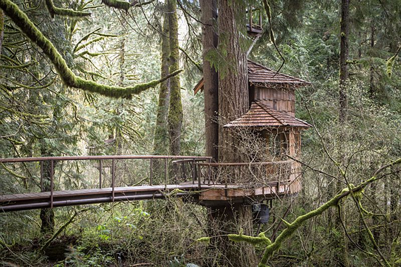 Burl Treehouse at Treehouse Point_7