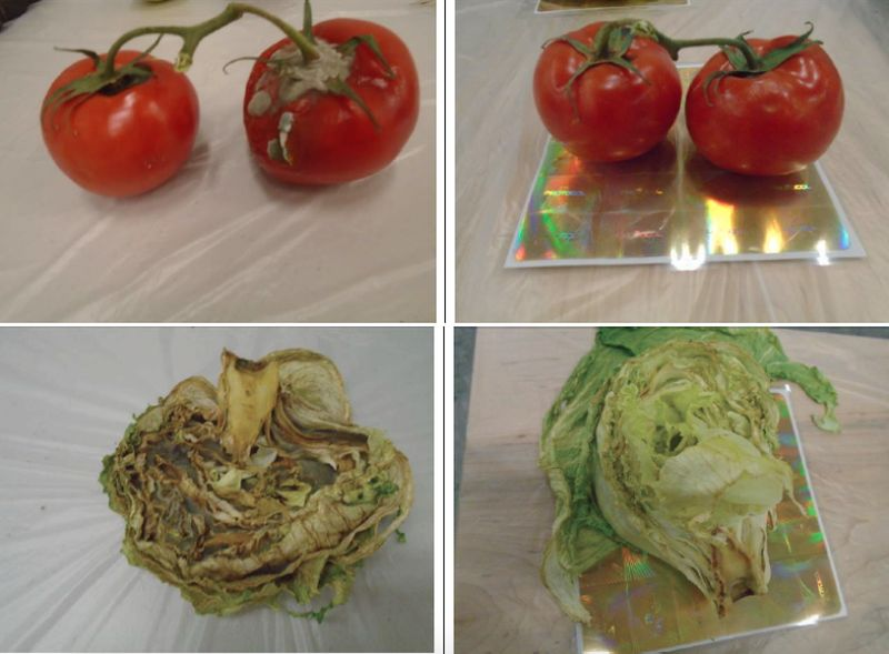 Food Freshness Card prevents produce from going bad_9