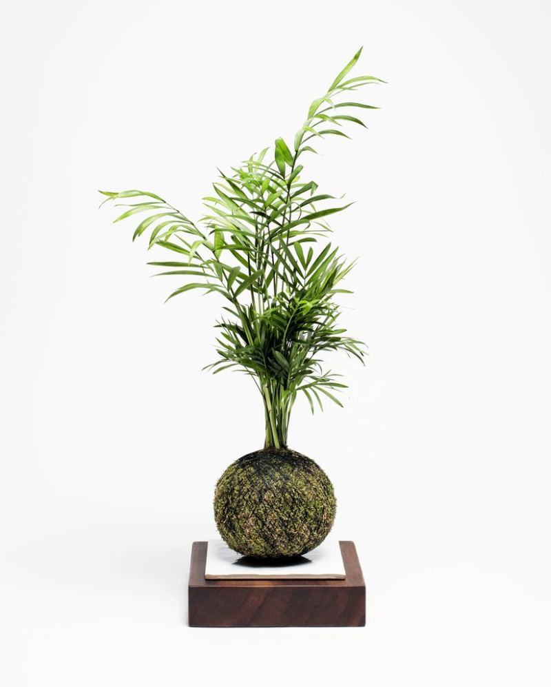 Kokedama by We Smell The Rain