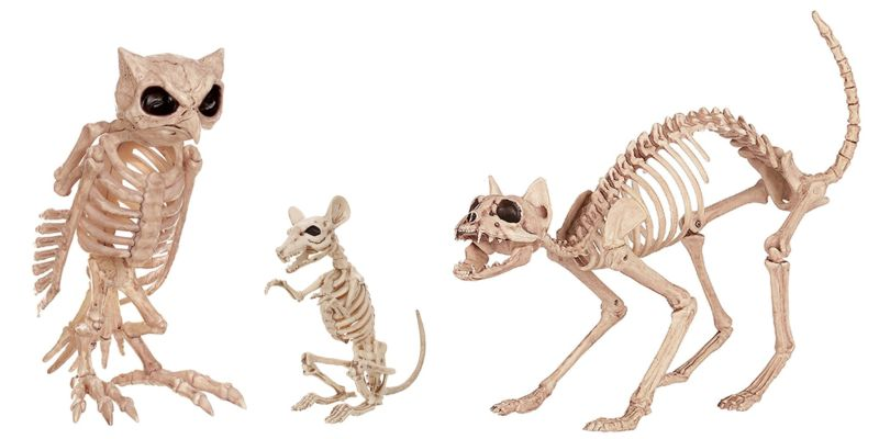life-sized animal skeletons for halloween