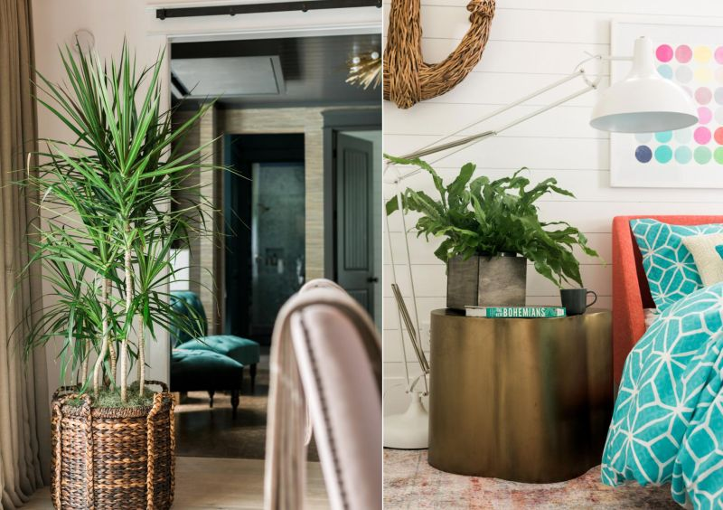 Modern square shaped planters over the sculptural brass table