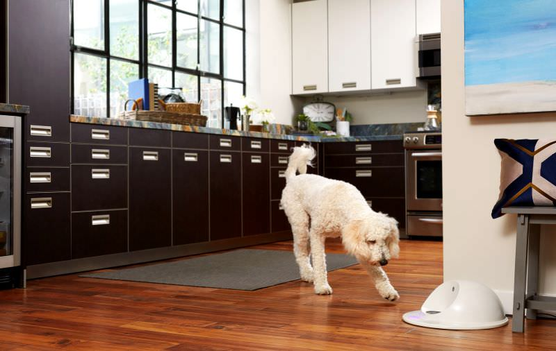 cleverpet-and-dog-in-action