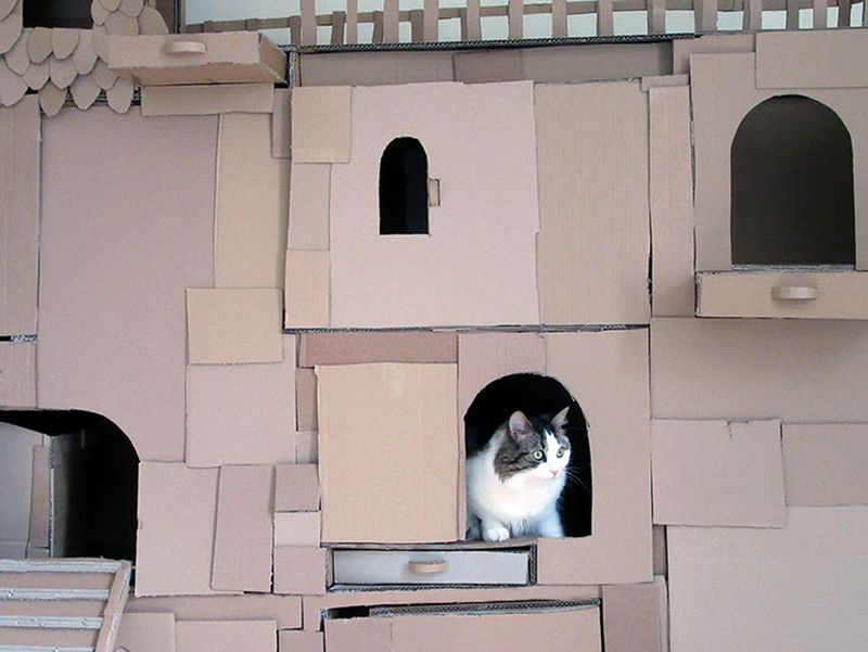 This DIY cathouse has multiple doors and windows
