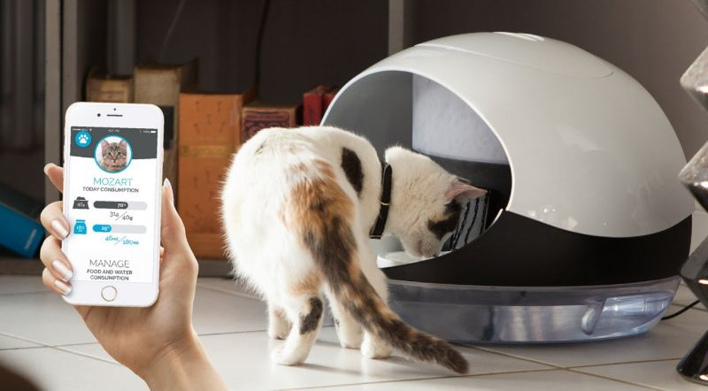 Catspad smart cat feeder identifies your cat to deliver food
