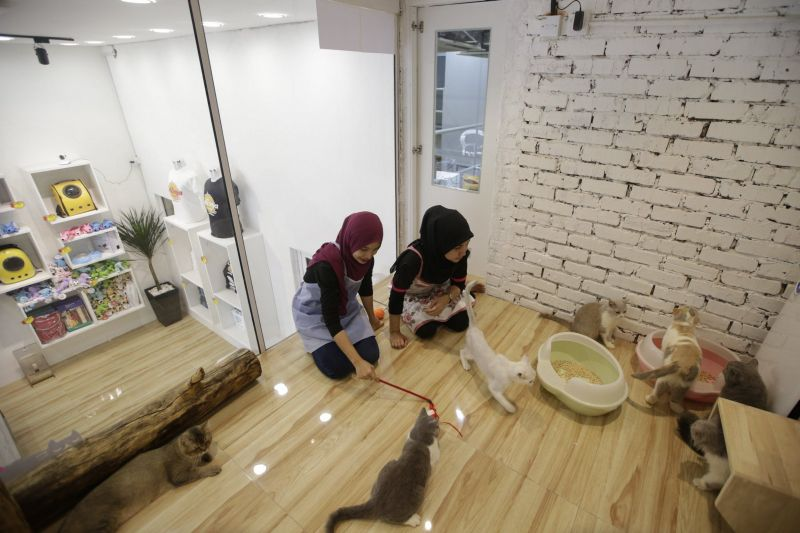 Catzonia in Malaysia is world's first five-star Cat Hotel