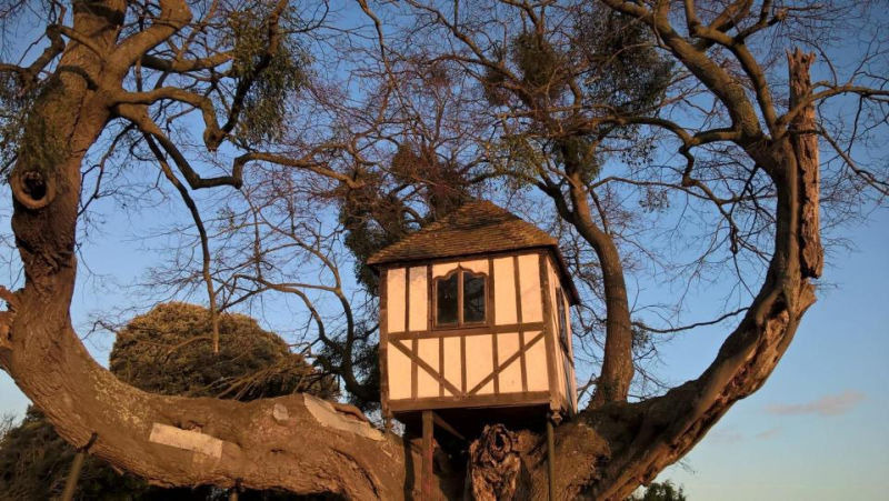 World's oldest treehouse in Pitchford dates back to Princess Victoria