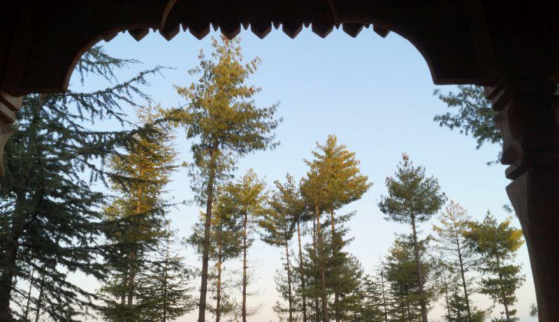 Himalayan Bliss Treehouse Shimla