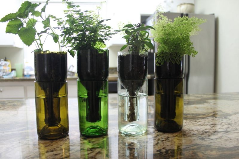 Self-watering planter made of wine bottle