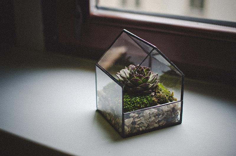 Glass Terrarium Planter