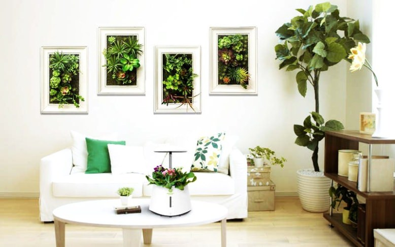 How to purify indoor air naturally and live healthy