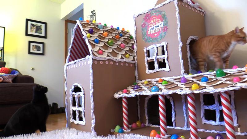 Cole and Marmalad cathouse-11