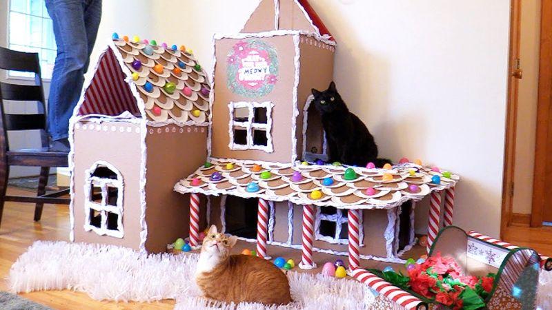 Cole and Marmalad cathouse