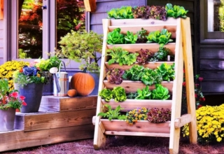 Budget Gardening Ideas to Grow Veggies and Herbs in Winters