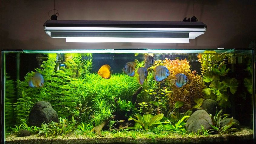 Tips for aquarium maintenance and care - DIY