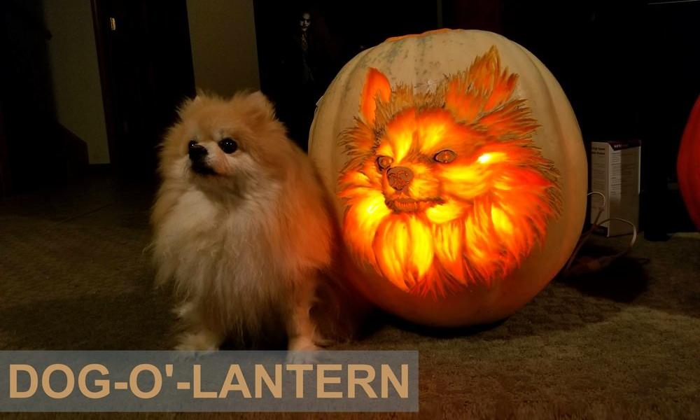 Carve dog-o'-lantern Pumpkin-This-Halloween