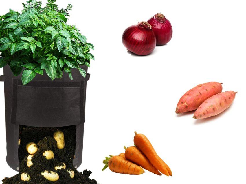 Growsun 10 Gallon Fabric Potato Bag - Gifts for girlfriend