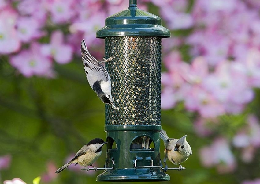 Brome Squirrel Buster bird feeder