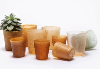 Designers Transform Seafood Waste into Sustainable Bioplastic
