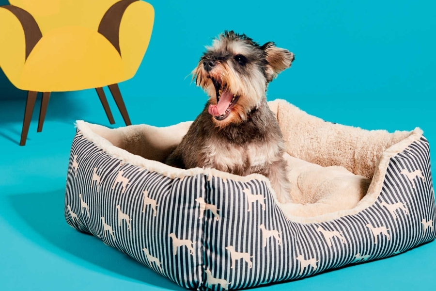 Aldi pet products collection