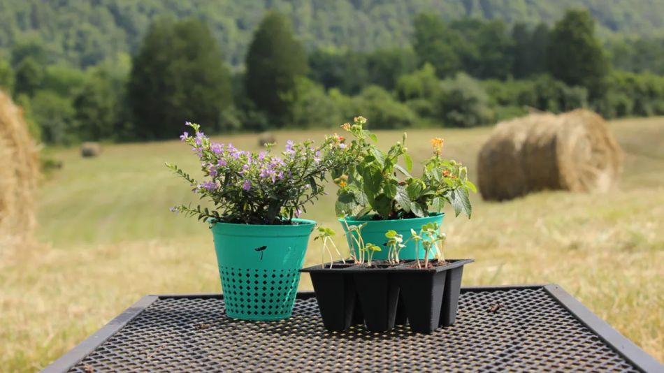 Biodegradable plastic pot can be planted along with the flora